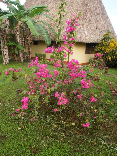 Flowering plants outside our thatched cabin