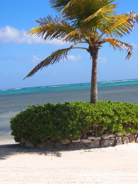 Belize barrier reef off Ambergis Caye