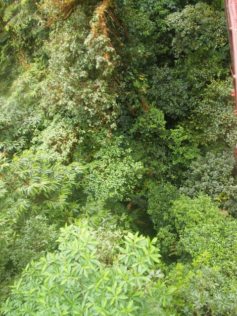 Canopy of tropical trees below the sky bridge