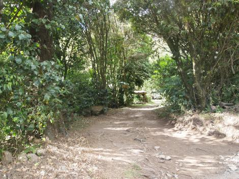 Road into Juan's coffee farm