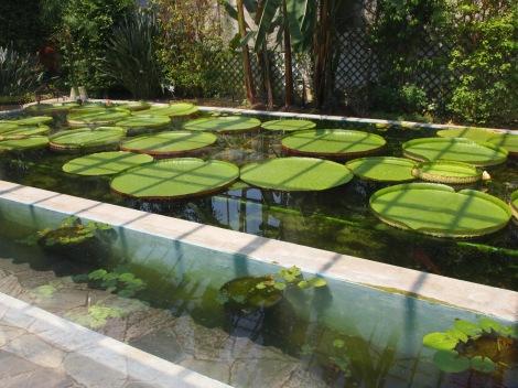 Australian water plants