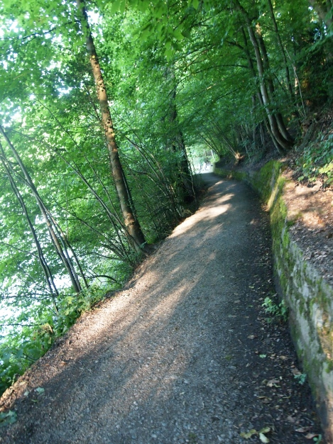 river walk through woods