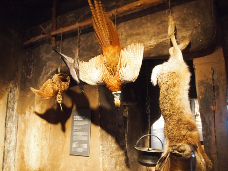 Stuffed fowl and rodents which provided fresh meat for the duke and family