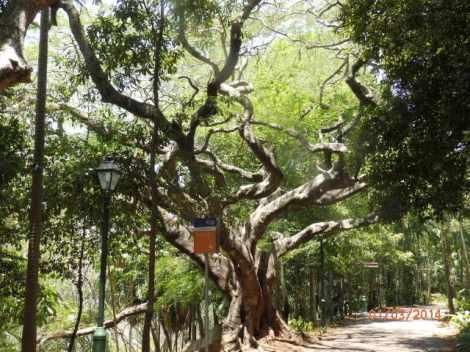 Edge of mangroves on Brisbane River