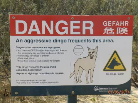 Dingo warning sign at Pinnacles