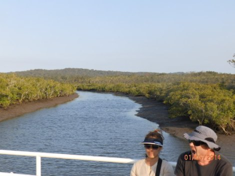 Mangrove swamp on Fraser Island west coast