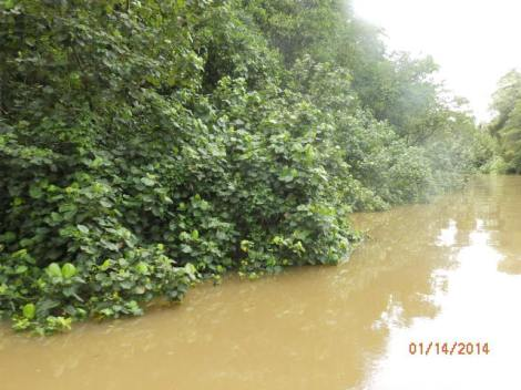 High water on the Daintree after heavy rains