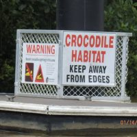 Cruisin' for 'crocs' on the Daintree