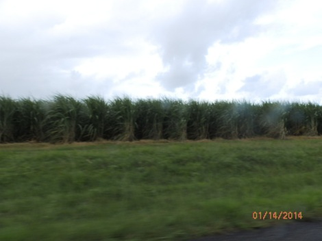 Sugar cane plantation along the James Cook Highway