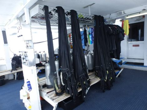 Stinger suits washed and hanging up to dry